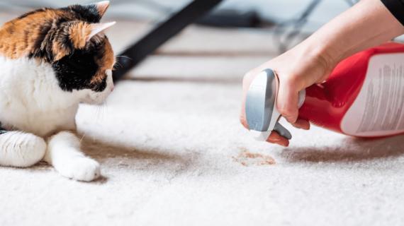 Carpet Warranties